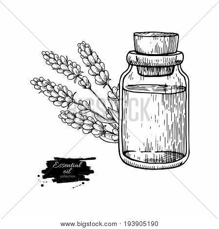 Lavander essential oil bottle and bunch of flowers hand drawn vector illustration. Isolated drawing for Aromatherapy treatment, alternative medicine, beauty and spa, cosmetic ingredient. Great for label, poster, flyer, packaging design.