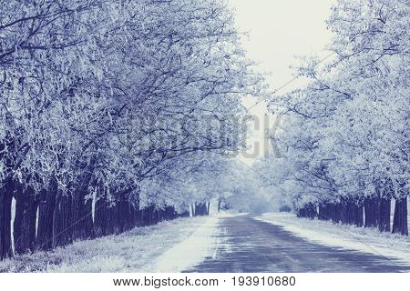 Snow covered alley in the winter