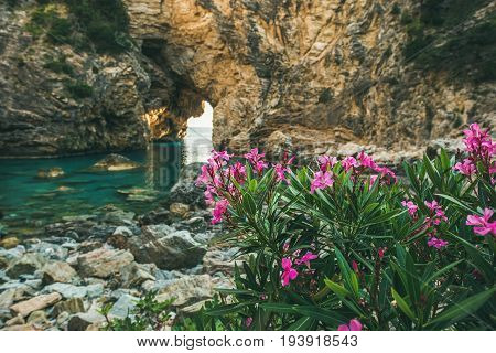 Blooming pink Rhododendron tree in picturesque sea bay with archway in the rocks near Antiocheia Ad Cragum ancient town ashes in Alanya district, Antalia region, Mediterranean Turkey