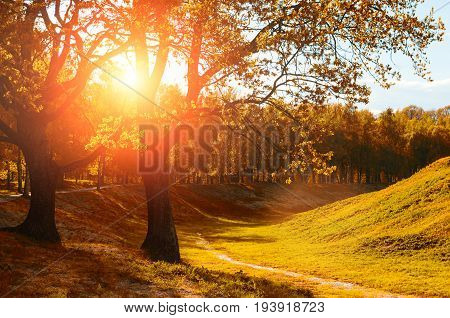 Autumn landscape view of autumn trees in the park lit by sunshine- sunny autumn landscape scene of autumn yellow trees in autumn park in sunny autumn evening