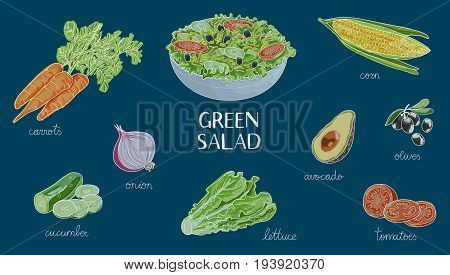 vector hand drawn illustration with green salad ingredients:cucumber, corn, olives, lettuce, tomatoes, carrot, onion, avocado