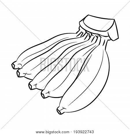 Hand drawn sketch of Cultivated Banana isolated Black and White Cartoon Vector Illustration for Coloring Book - Line Drawn Vector