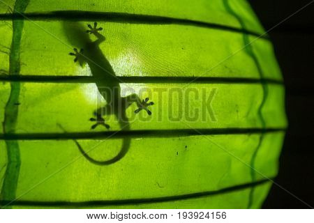 Shadow of a gecko in a green round lamp, Gili Air, Lombok, Indonesia