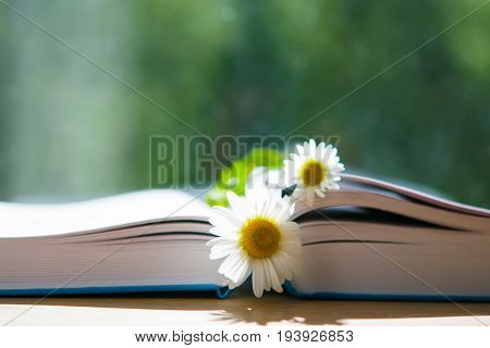 Summer landscape, open book, side view, with a bookmark with a Daisy flower on the background scenery blur outside the window