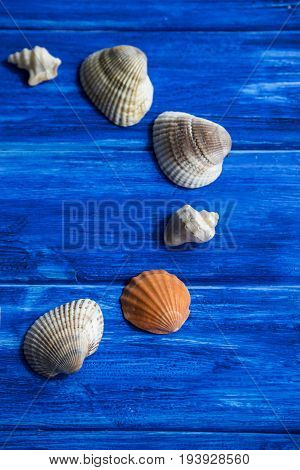 Seashells on a blue wooden background. Frame and copyspase