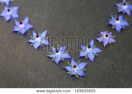 Edible blue borage flowers on a dark gray background
