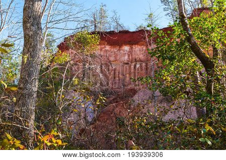Red loamy wall of Providence Canyon seen behind trees from the canyon floor in sunny autumn day USA