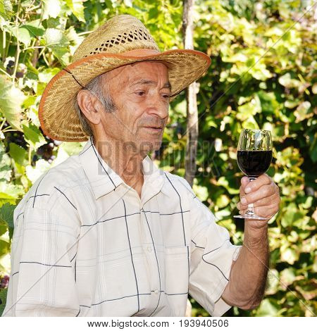 Senior Caucasian smiling viticulturist holds wineglass with red wine