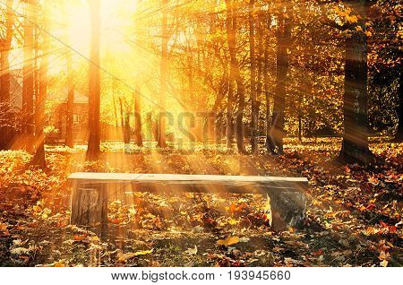Autumn landscape with wooden bench under bright sunlight in autumn forest. Autumn landscape in sunny weather -sunny autumn scene with autumn trees and fallen autumn leaves on the ground in the autumn forest