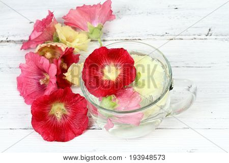 Making infusion from hollyhock flower Alcea rosea. Infusion good against cough laxative and inflammation herbal medicine