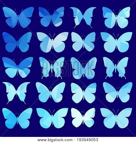 vector butterfly insect art white color wallpaper fly graphic