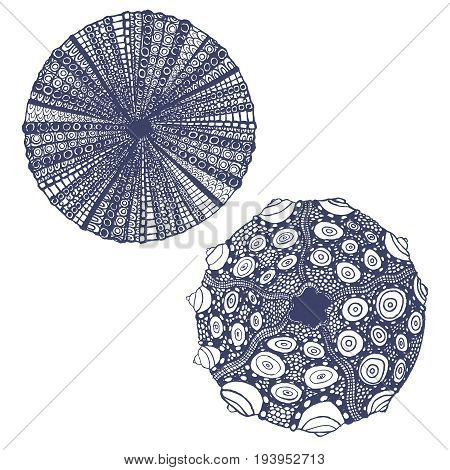 vector isolted set of hand drawn urchins