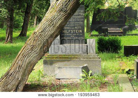 old headstone and trunk of a tree slowly falling down on the jewish cemetery in Frydek-Mistek, Czech Republic, July 2, 2017
