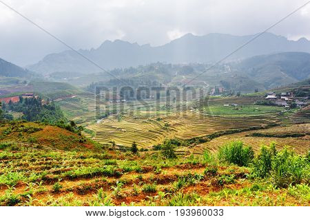 Top View Of Rice Terraces At Highlands Of Sa Pa, Vietnam
