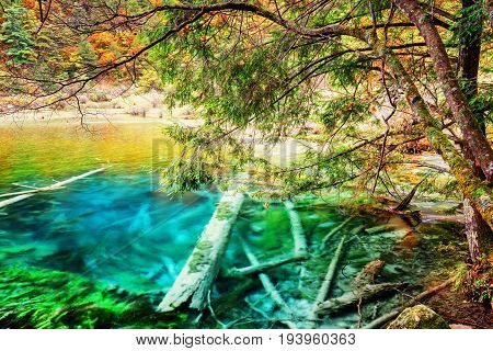Beautiful Azure Lake With Submerged Tree Trunks Among Fall Woods