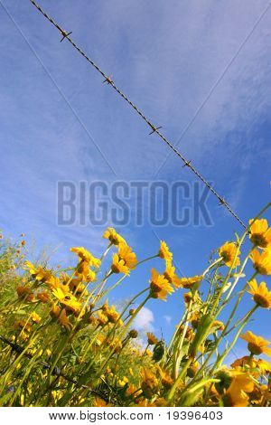 Field flowers and prickly tape poster