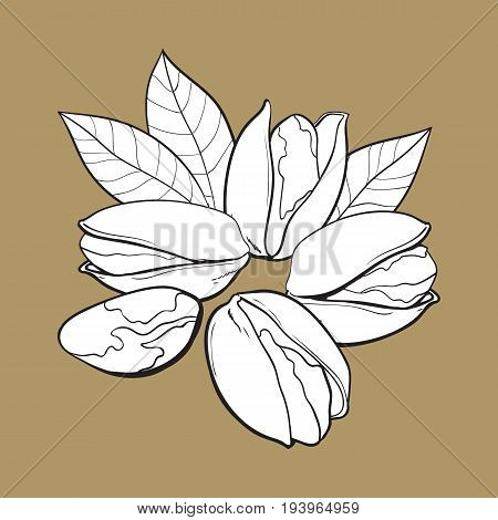 Group of black and white pistachio nuts, shelled and unshelled, sketch style vector illustration isolated on brown background. Realistic hand drawing of pistachio nuts with leaves