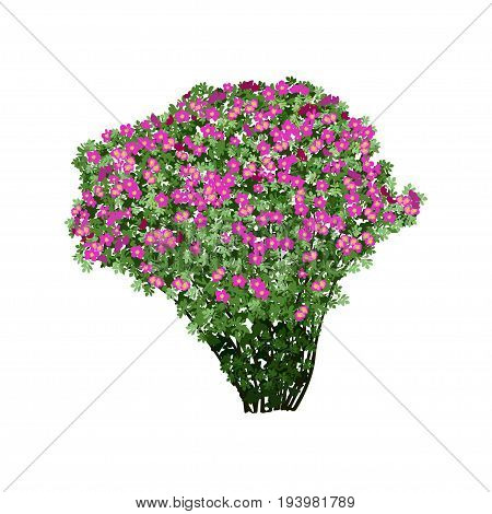 Big bush of a dogrose (Rosa majalis) with red flowers the color vector image on a white background