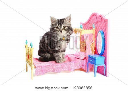 Beautiful gray kitten sitting on pink doll bed
