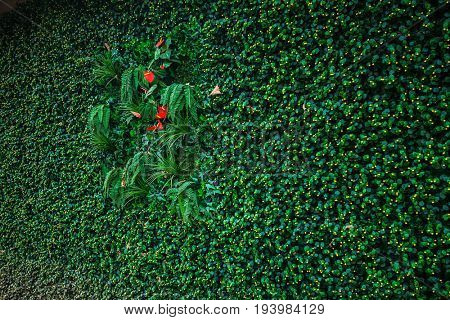 Eco green wall isolation background for the wooden house technology
