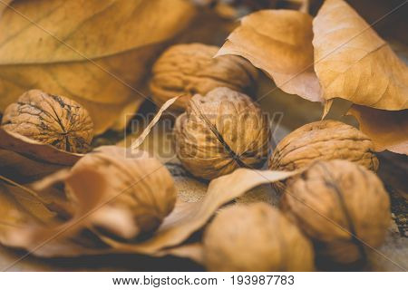 Whole walnuts scattered on wood surface yellow and brown dry autumn leaves harvest thanksgiving halloween tranquil cozy atmosphere