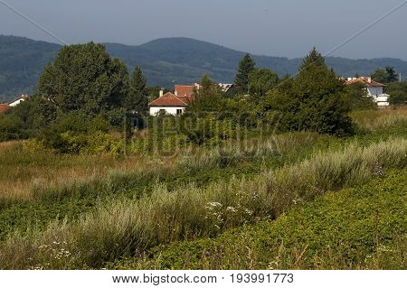 Scene with potato plant field, forest and residential district of bulgarian village Plana, Plana mountain, Bulgaria