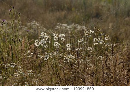 Majestic spring glade with different grass and blossom  wildflower, Plana mountain, Bulgaria
