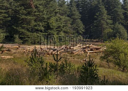Mountain green forest with glade and logging, Plana mountain, Bulgaria