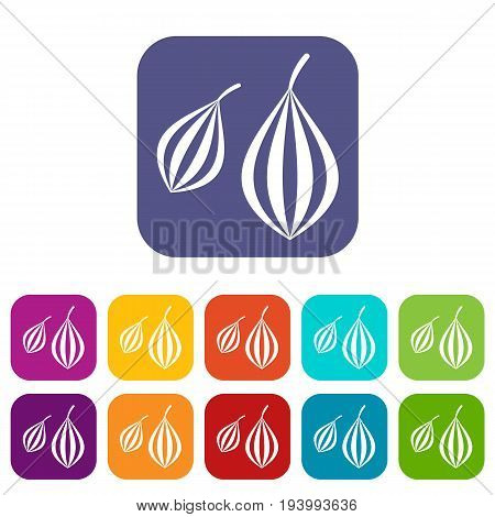 Trachyspermum ammi icons set vector illustration in flat style In colors red, blue, green and other