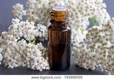 A Bottle Of Yarrow Essential Oil With Fresh Yarrow Flowers