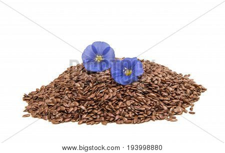 bllue flax flower with seeds isolated on white background