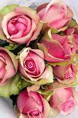Closeup of Beautiful Nostalgic Shrubs Eden Rose Bouquet poster
