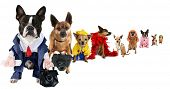 a spoof on business images but with dogs poster