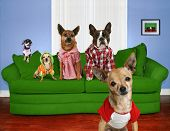funny dog card poster