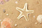 Seashells and a starfish lie on sand seacoast poster