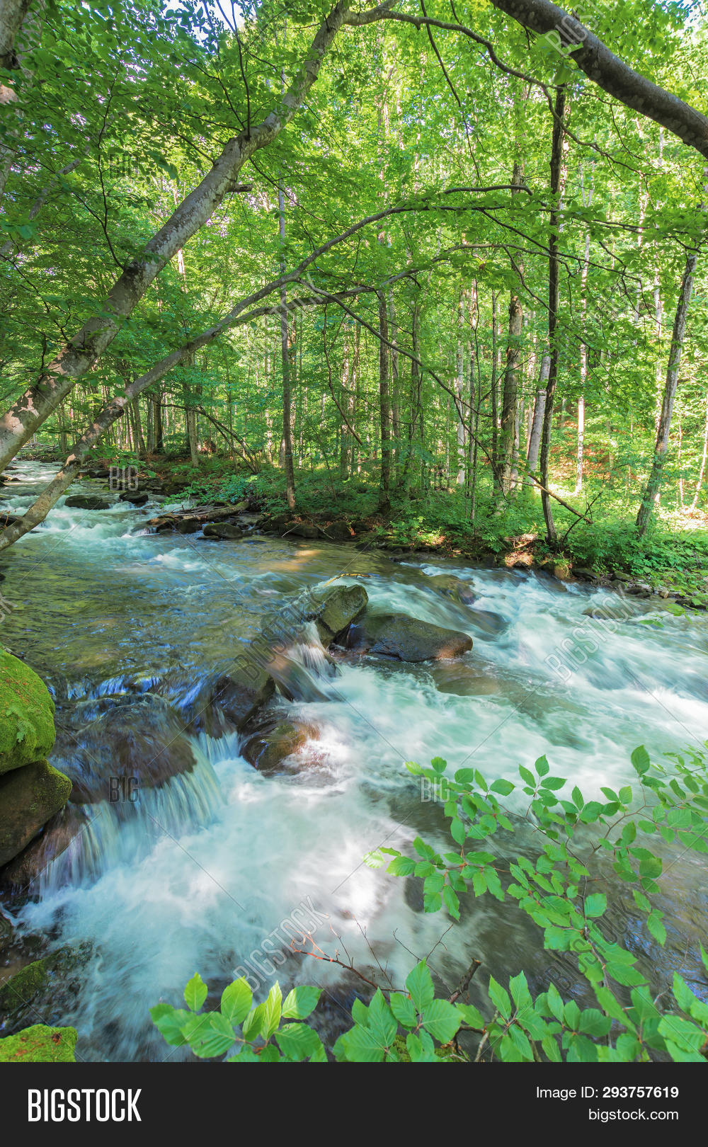 Bank Forest River Image Photo Free Trial Bigstock