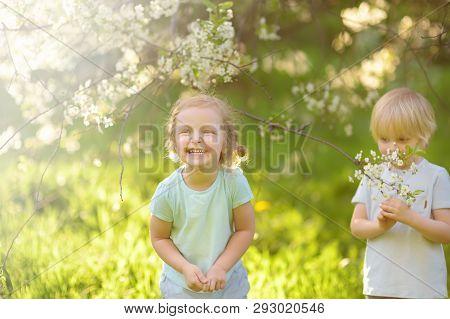 Cute Little Children Playing Together In Blooming Cherry Garden. Preschooler Boy And Girl. Best Frie