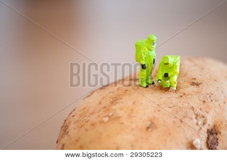 Group Of Researchers In Protective Suit Inspecting A Potato.
