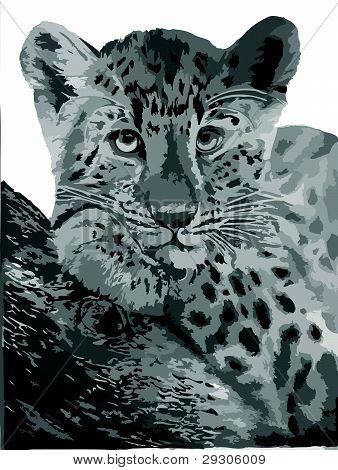 Leopard [EPS]