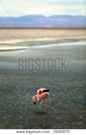 Flamingo In Headwind