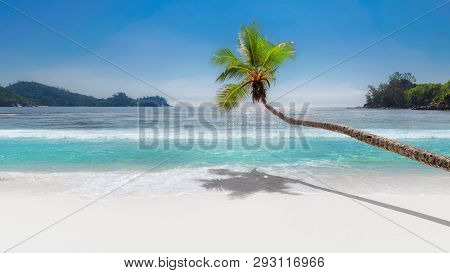 Paradise Beach. Coconut Palm Tree Over Tropical White Sand Beach And Turquoise Sea On Summer Vacatio