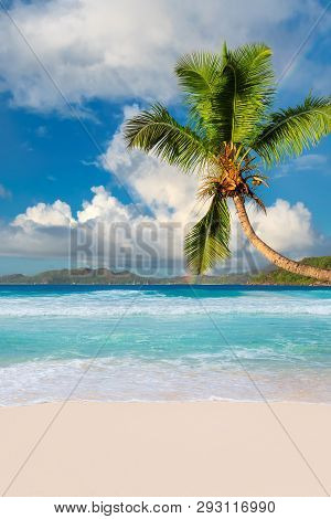 Paradise Beach. Coco Palm On Tropical Beach And Turquoise Sea On Summer Vacation Island.