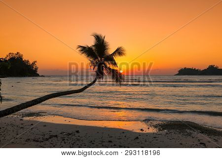 Beautiful Sunset Over The Sea With Coco Palm Over The Beach In Jamaica Caribbean Island