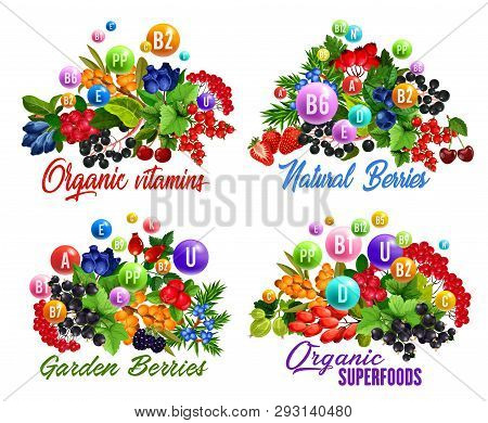 Natural Vitamins In Garden And Wild Berries Vector Icons. Strawberry, Cherry And Blackberry Fruit Br