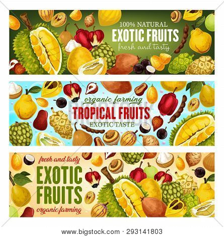 Exotic Fruits And Tropical Berries Vector Banners Design. Asian Durian, Pomelo And Kumquat, Sweetsop
