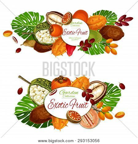 Exotic Fruits And Berries Vector Posters With Tropical Star Apple, Cantaloupe And Persimmon, Dates,