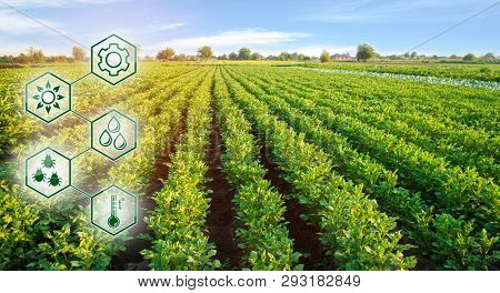 Potato In The Field. High Technologies And Innovations In Agro-industry. Study Quality Of Soil And C