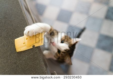 Domestic Cat Trying To Steal Slice Of Cheese. Soft And Taloned Cat,s Paw On A Table In  A Kitchen.