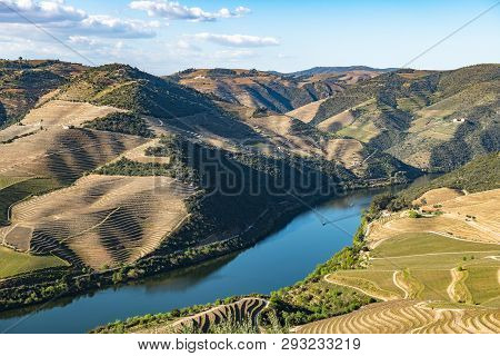 View Of The Terraced Vineyards In The Douro Valley And River Near The Village Of Pinhao, Portugal. C
