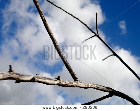 Branches In The Sky